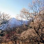 春の訪れ(秩父市)